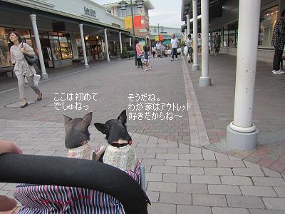 IMG_4330.jpg