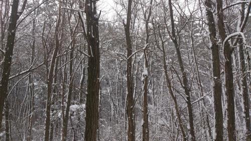 2012年振り続ける雪