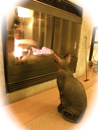 heater2013-1