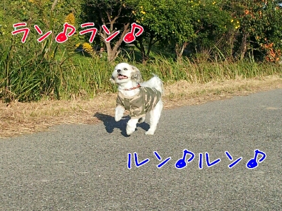 fc2blog_2012111111110601e.jpg