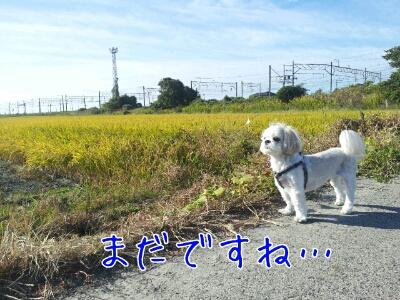 fc2blog_20121111111252f32.jpg
