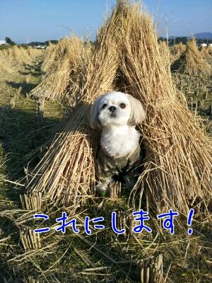 fc2blog_201211111114164eb.jpg