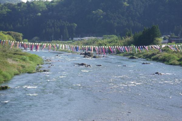 長良川で泳ぐこいのぼり