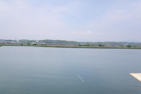 背割堤の同地点から見られる揖斐川のヨシ原群