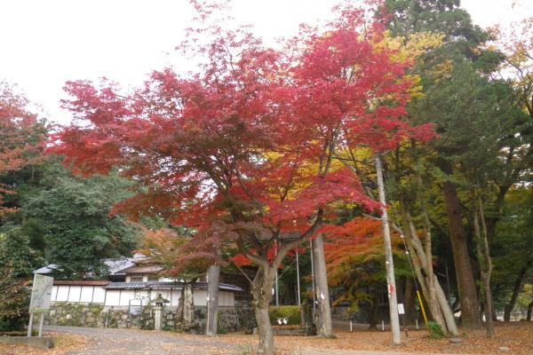 美濃洲原神社の紅葉