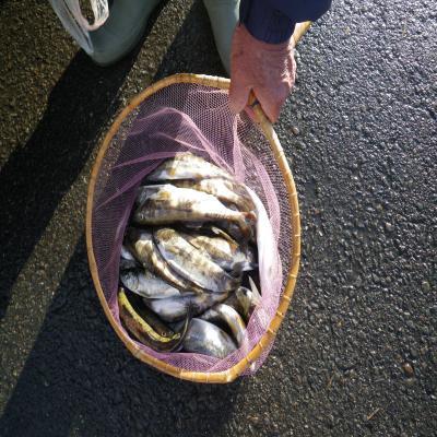 岐阜の釣り人の釣果