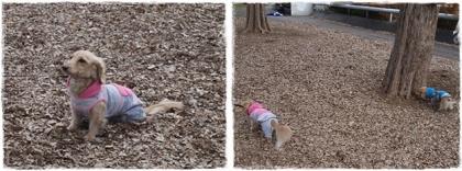 公園初歩き~②