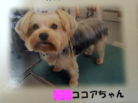 動物病院カレンダー ココアちゃん