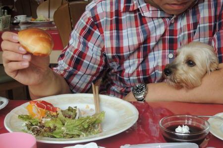まりおもバターロールが食べたい
