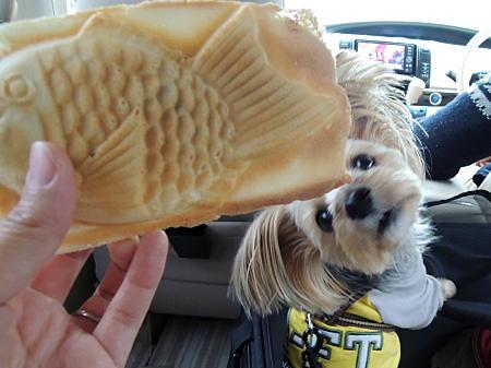 まりおも鯛焼きが食べたい