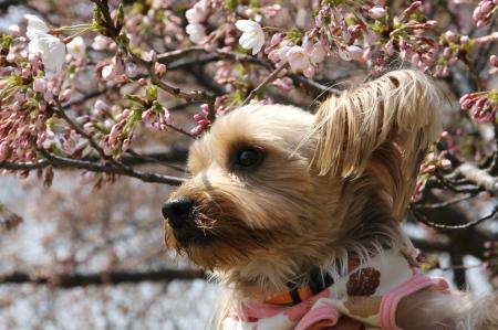 桜ともこ2
