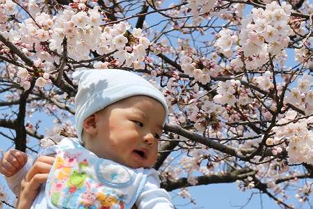 桜とほじゃ