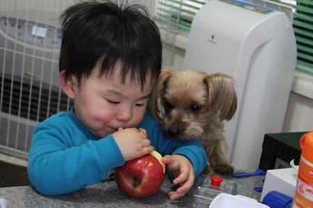 りんごを狙うもこ1