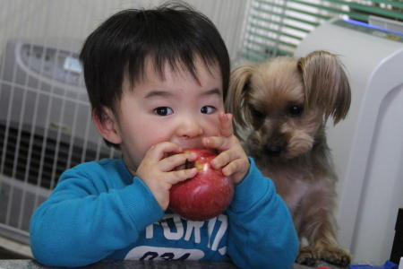 りんごを狙うもこ2