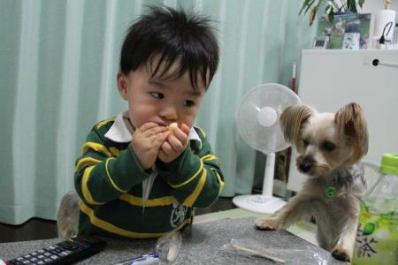 まりお、ほじゃのおやつがほしい