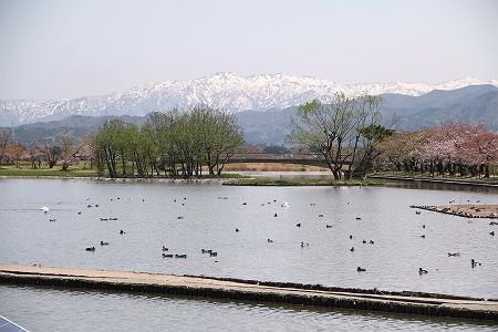 4/28 瓢湖