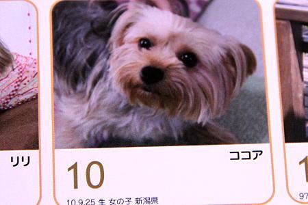 365カレンダー ココアちゃん
