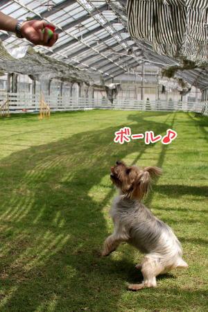 ボール好き犬