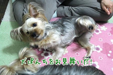 まりお「犬ぱんちをお見舞いだ!」