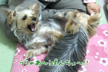 まりお、犬ぱんち