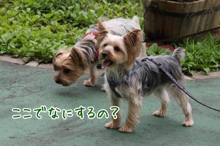 2012/07/22 妙高山(2454m)妙高市