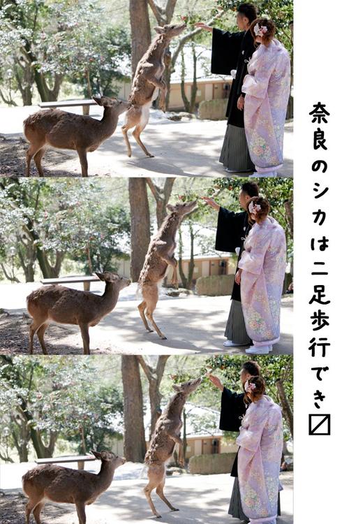 奈良ロケーションフォト鹿