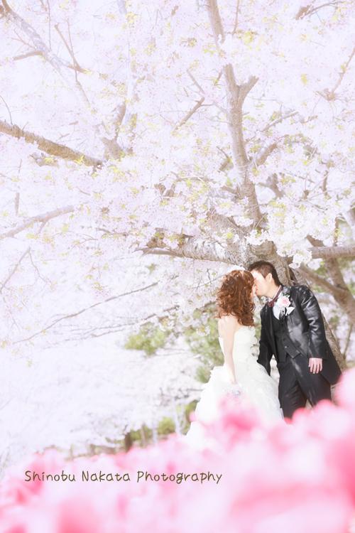 桜ロケーションフォト1