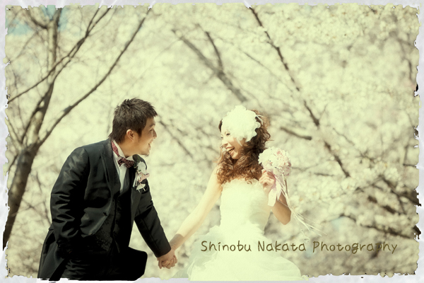 桜ロケーションフォト2