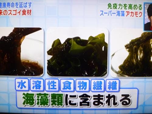 akamoku-01.jpg