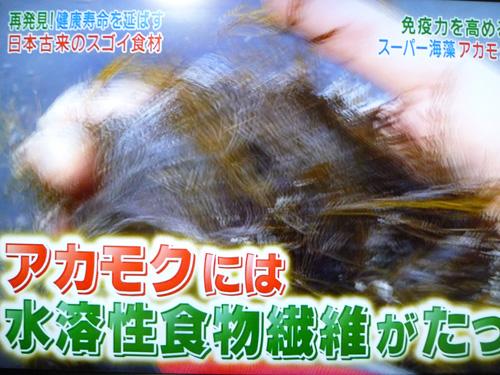 akamoku-04.jpg