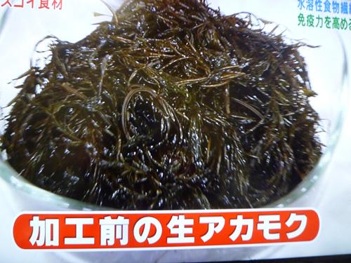 akamoku-05.jpg
