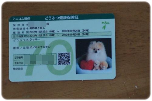DSC06615_20120810232354.jpg