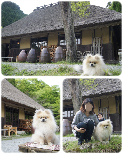 cats_20120518152857.jpg