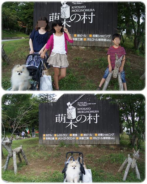 cats_20120815233439.jpg