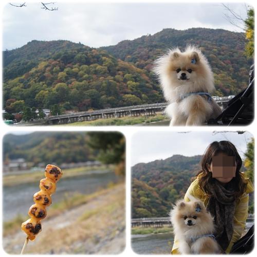 cats_20121115133034.jpg