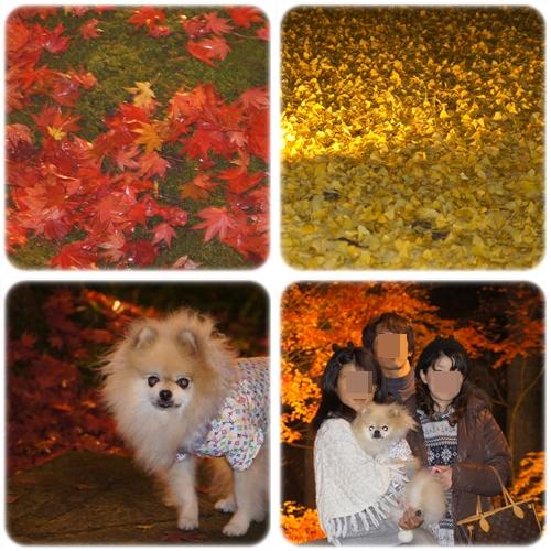 cats_20121127223619.jpg