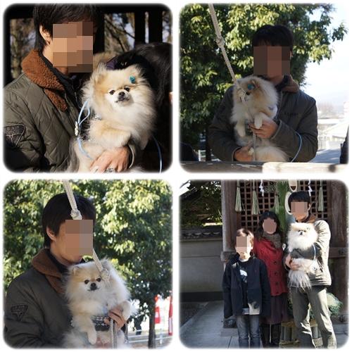 cats_20130105080244.jpg