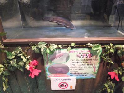 20120526八景島8