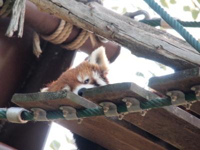 83.旭山動物園