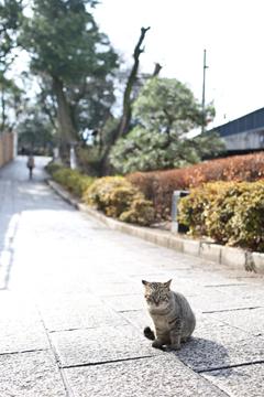 小田原城にすむネコ