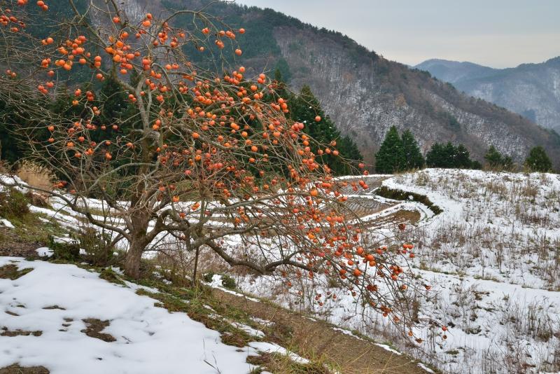 山村雪景色3 (香川県まんのう町)