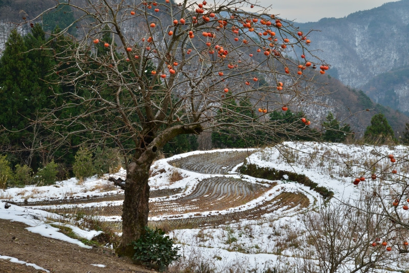 山村雪景色1 (香川県まんのう町)