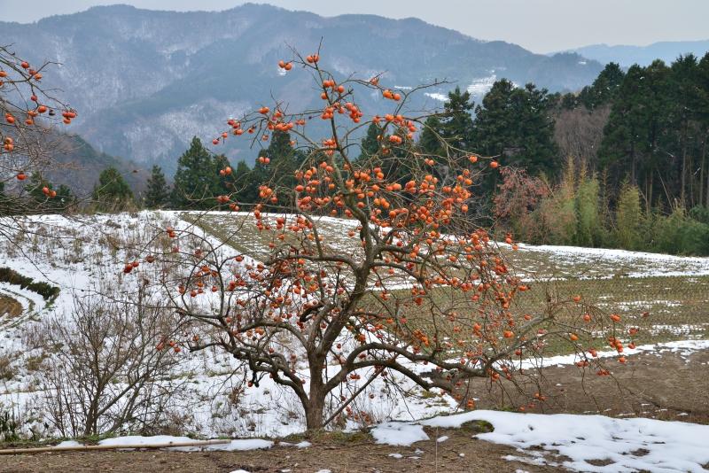 山村雪景色6 (香川県まんのう町)