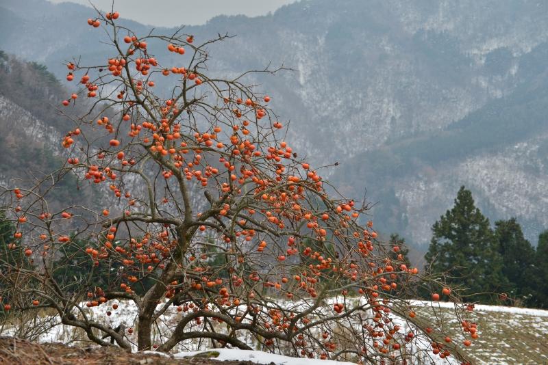 山村雪景色2 (香川県まんのう町)