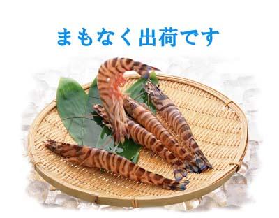 2012」秋 車海老TOP制作