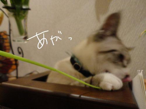 20120521_12.jpg