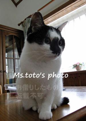 20120625_1.jpg