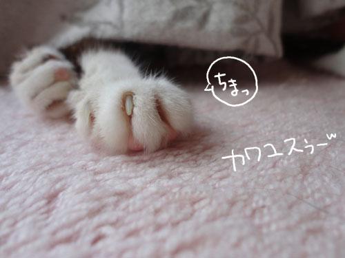 20120721_4.jpg