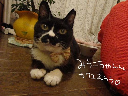 20120730_9.jpg