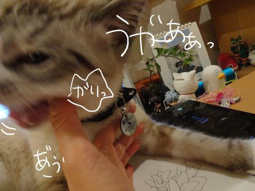 20120806_4.jpg